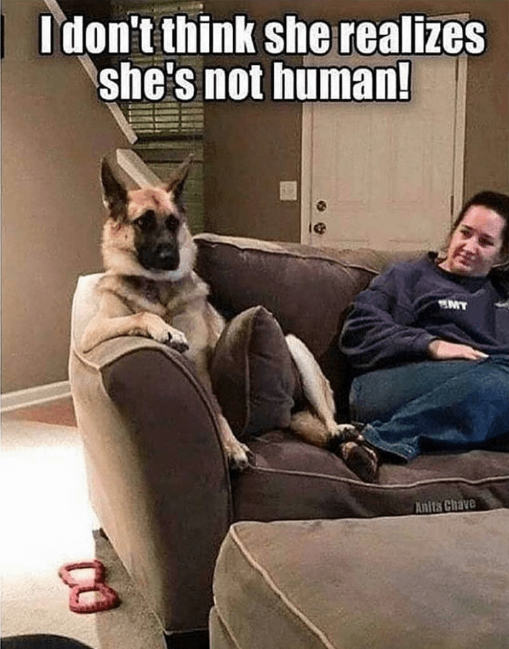 german shepherd sitting on couch with woman doesn't know she's not human dog meme