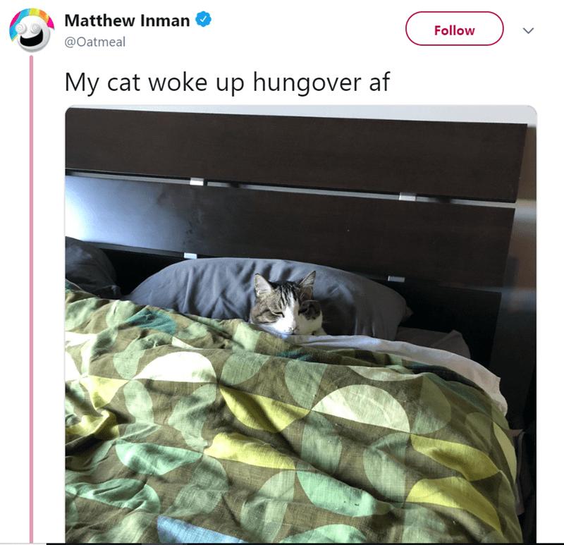 Cat - Matthew Inman Follow @Oatmeal My cat woke up hungover af