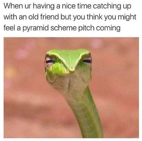 Smooth Greensnake - When ur having a nice time catching up with an old friend but you think you might feel a pyramid scheme pitch coming