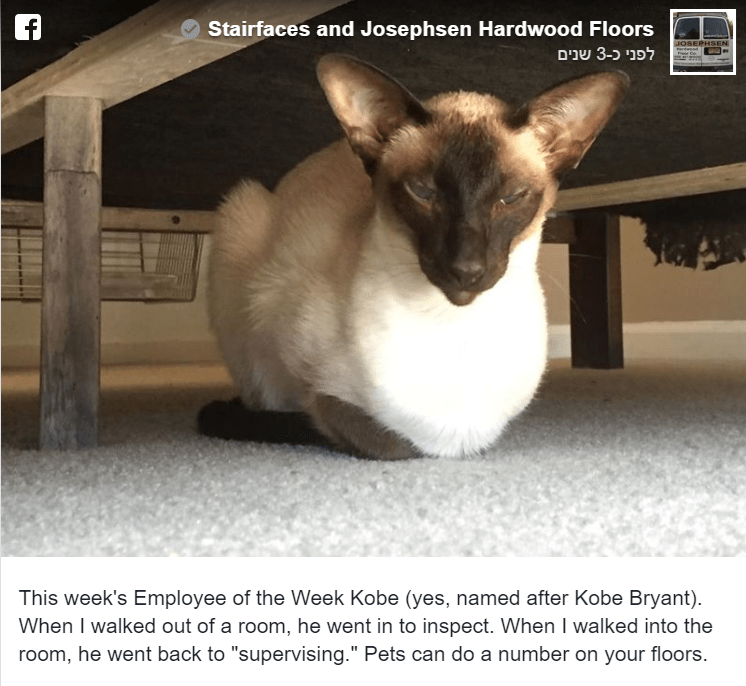 """Cat - Stairfaces and Josephsen Hardwood Floors 3 שנים JOSEPHSEN dwad This week's Employee of the Week Kobe (yes, named after Kobe Bryant) When I walked out of a room, he went in to inspect. When I walked into the room, he went back to """"supervising."""" Pets can do a number on your floors"""