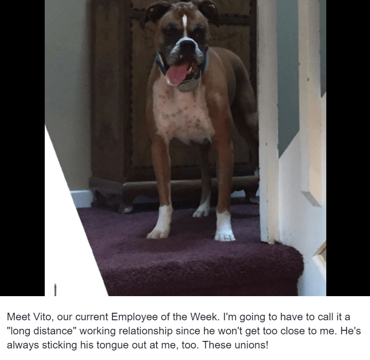 """Dog - Meet Vito, our current Employee of the Week. I'm going to have to call it a """"long distance"""" working relationship since he won't get too close to me. He's always sticking his tongue out at me, too. These unions!"""