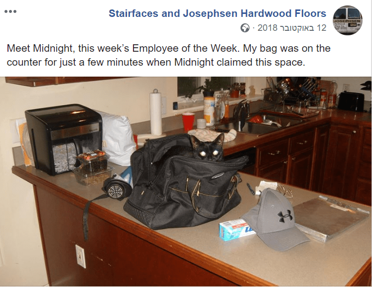 Property - Stairfaces and Josephsen Hardwood Floors 12 2018 מ Meet Midnight, this week's Employee of the Week. My bag was on the counter for just a few minutes when Midnight claimed this space. JOSEPHSEN 8