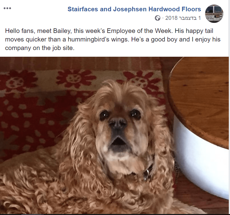 Dog - Stairfaces and Josephsen Hardwood Floors JOSEPHSEN 1 ב 2018מ Hello fans, meet Bailey, this week's Employee of the Week. His happy tail moves quicker than a hummingbird's wings. He's a good boy and I enjoy his company on the job site.