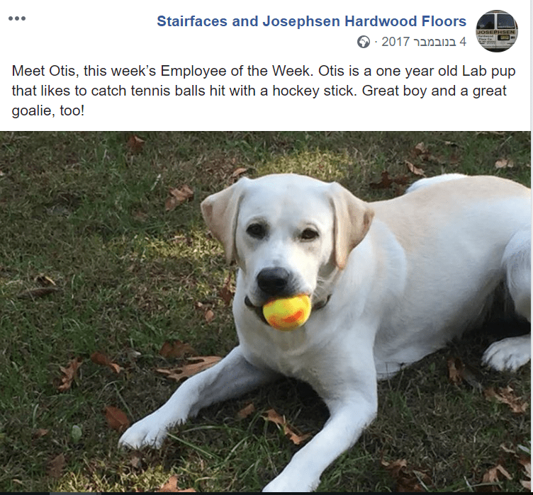Dog - Stairfaces and Josephsen Hardwood Floors JOSEPHSEN 4 בנובמבר 2017מ Meet Otis, this week's Employee of the Week. Otis is a one year old Lab pup that likes to catch tennis balls hit with a hockey stick. Great boy and a great goalie, too!