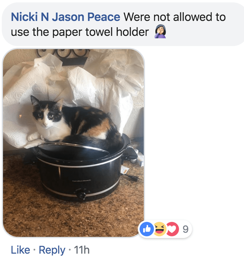Cat - Nicki N Jason Peace Were not allowed to use the paper towel holder nenct Like Reply 11h