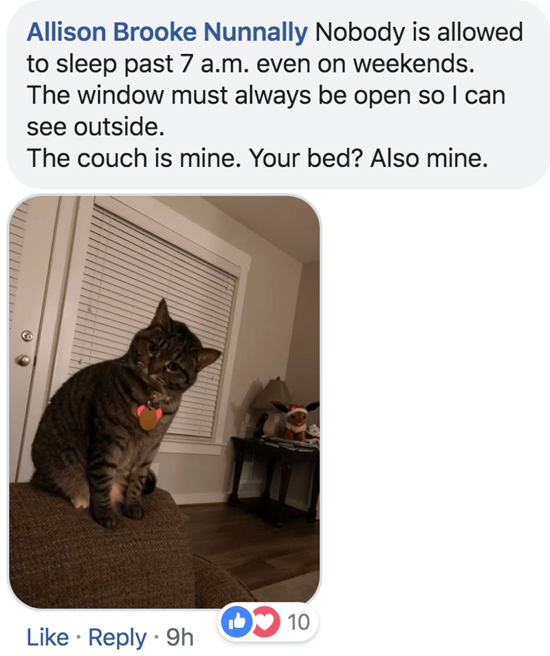 Cat - Allison Brooke Nunnally Nobody is allowed to sleep past 7 a.m. even on weekends. The window must always be open so I can see outside. The couch is mine. Your bed? Also mine. D10 Like Reply 9h