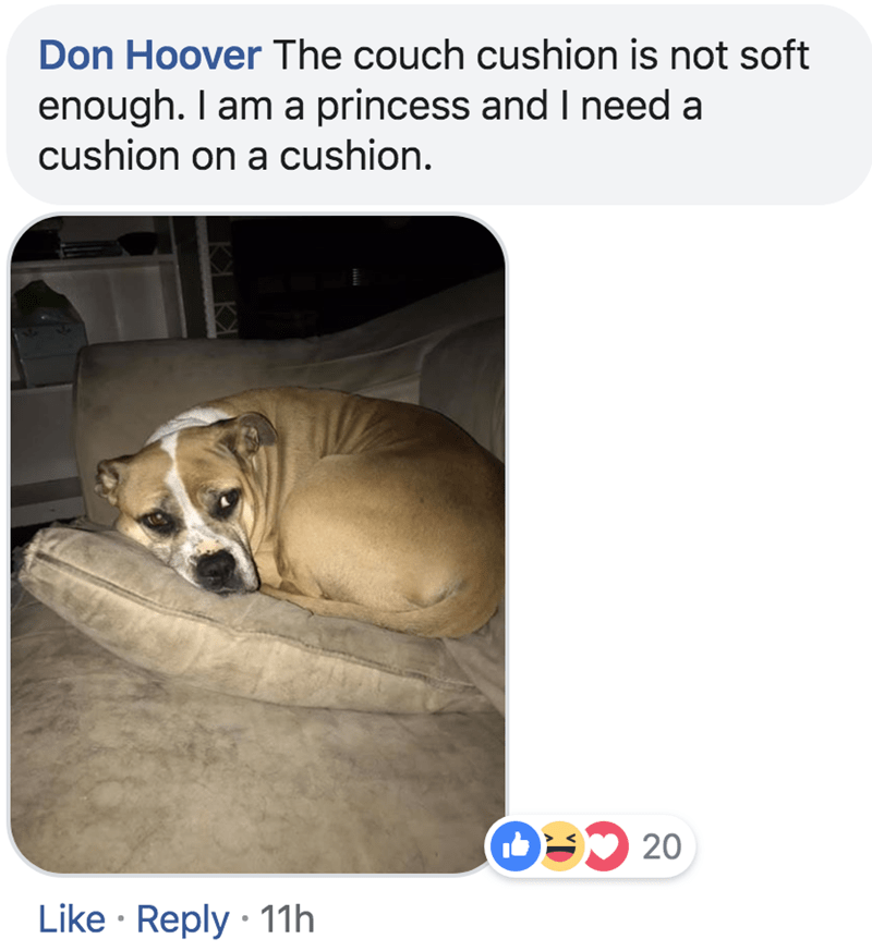 Canidae - Don Hoover The couch cushion is not soft enough. I am a princess and I need a cushion on a cushion. O20 Like Reply 11h