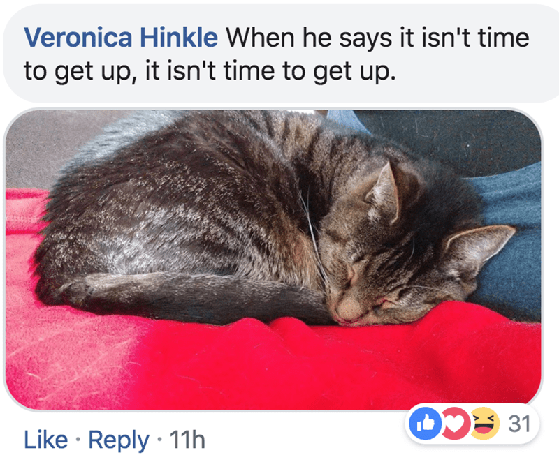Cat - Veronica Hinkle When he says it isn't time to get up, it isn't time to get up. D 31 Like Reply 11h