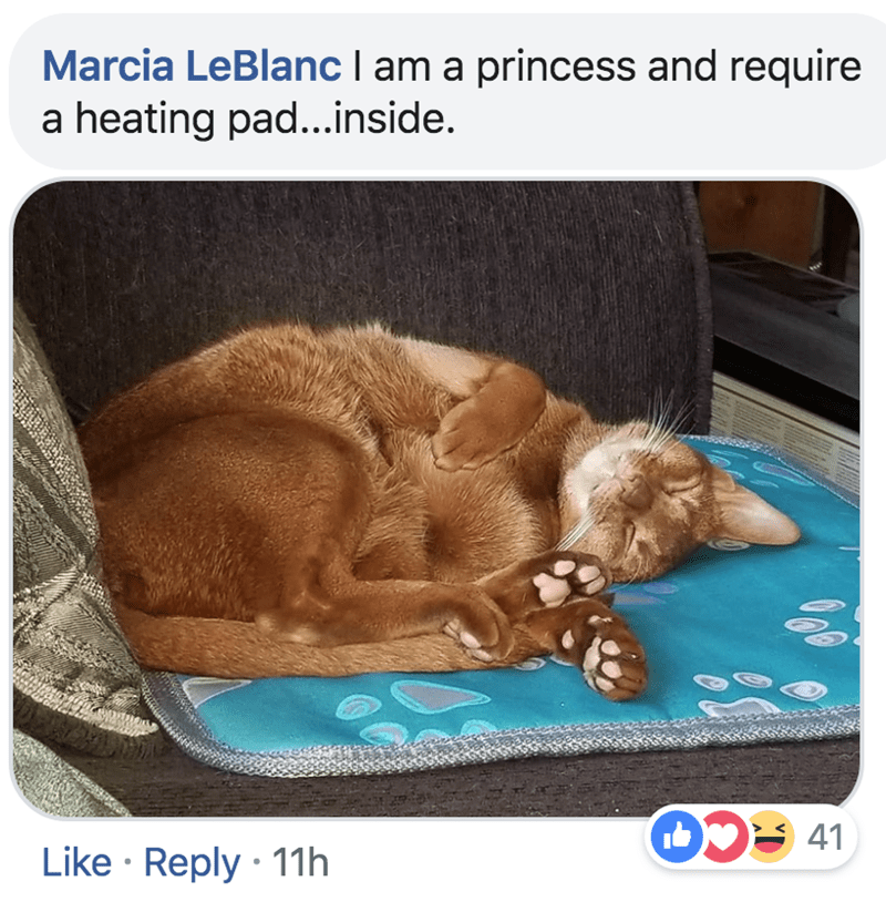 Canidae - Marcia LeBlanc l am a princess and require heating pad...inside. a 41 Like Reply 11h 0