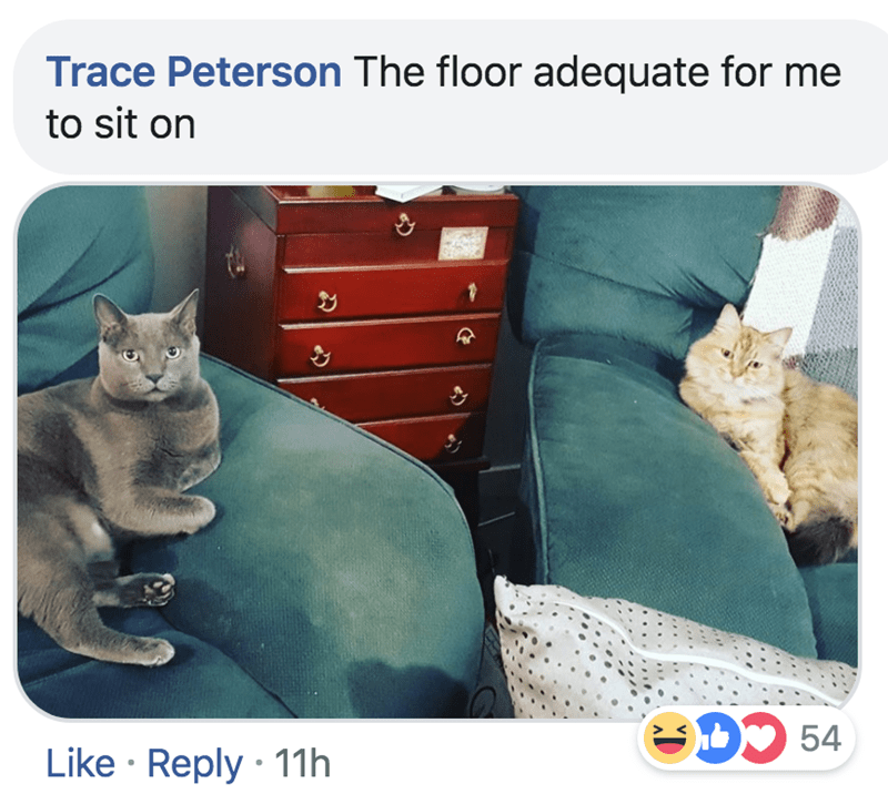 Cat - Trace Peterson The floor adequate for me to sit on CD54 Like Reply 11h