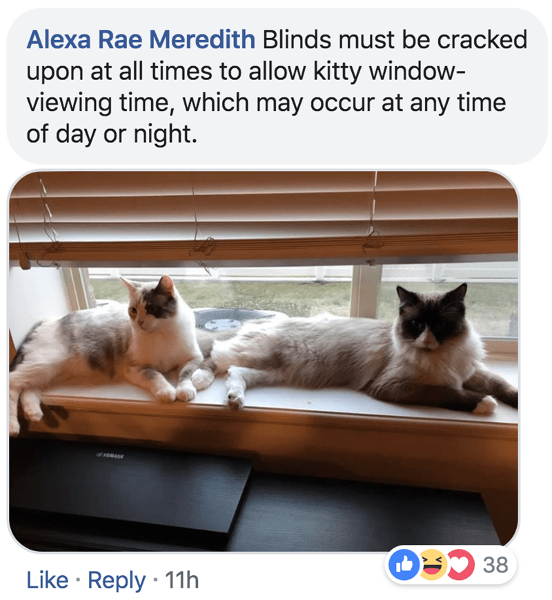 Cat - Alexa Rae Meredith Blinds must be cracked upon at all times to allow kitty window- viewing time, which may occur at any time of day or night. 38 Like Reply 11h