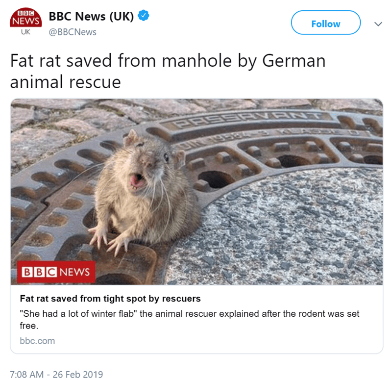 """Rat - BBC NEWS BBC News (UK) Follow @BBCNews UK Fat rat saved from manhole by German animal rescue VRNT BBC NEWS Fat rat saved from tight spot by rescuers """"She had a lot of winter flab"""" the animal rescuer explained after the rodent was set free. bbc.com 7:08 AM - 26 Feb 2019"""