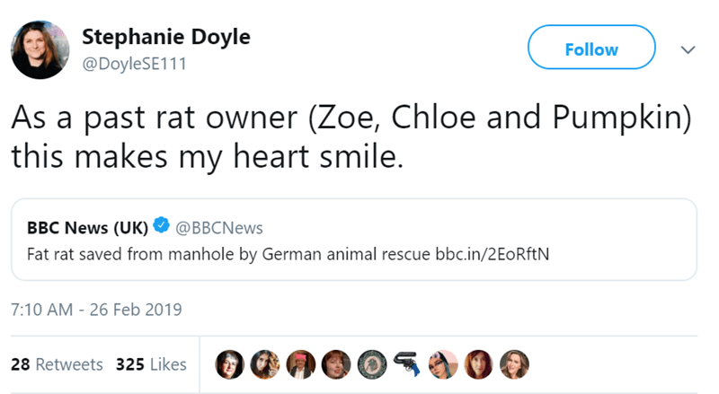 Text - Stephanie Doyle Follow @DoyleSE111 As a past rat owner (Zoe, Chloe and Pumpkin) this makes my heart smile. BBC News (UK) @BBCNews Fat rat saved from manhole by German animal rescue bbc.in/2EoRftN 7:10 AM - 26 Feb 2019 28 Retweets 325 Likes