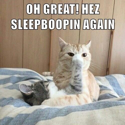 Cat - OH GREAT! HEZ SLEEPBOOPIN AGAIN