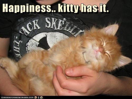 Cat - Happiness.. kitty hasit. ACK SHE CANHASCHEE2EURGER cOM