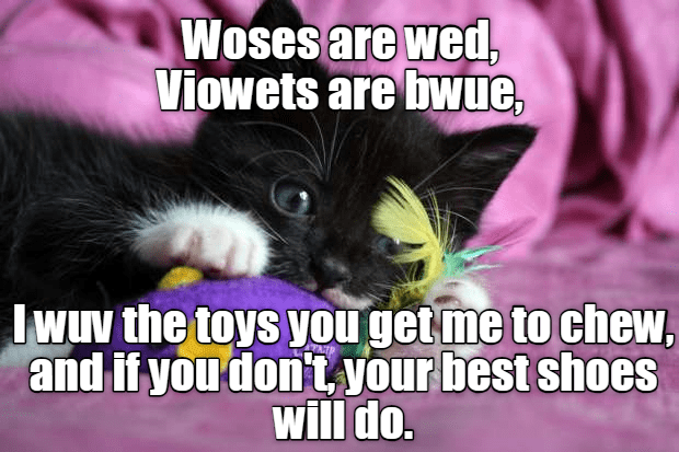 Cat - Woses are wed, Viowets are bwue Jwuv the toys you get me to chew, and if you don't your best shoes will do.