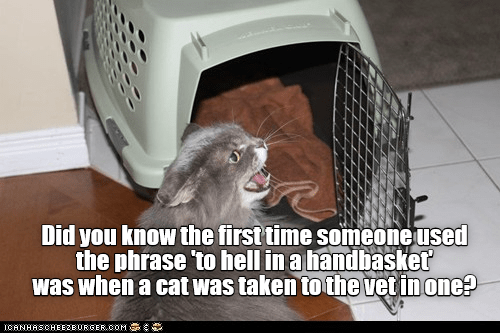 Photo caption - Did you know the first time someoneused the phrase to hell in a handbasket was when a cat was taken tothe vet in one? ICANHASCHEE2EURGER cOM