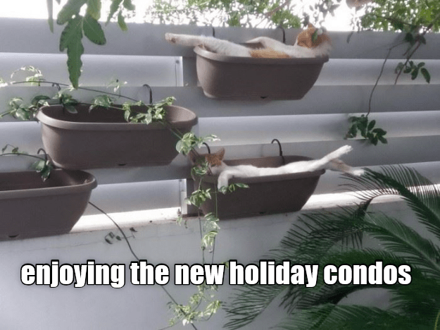 Flowerpot - enjoying the new holiday condos