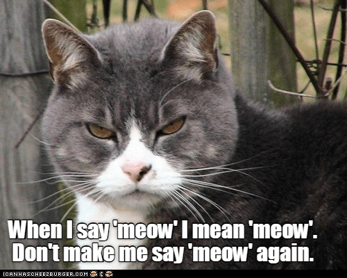 Cat - When Isay 'meow'I mean 'meow'. Don't make me say 'meow' again. CANHASCHEE2EURGER cOM
