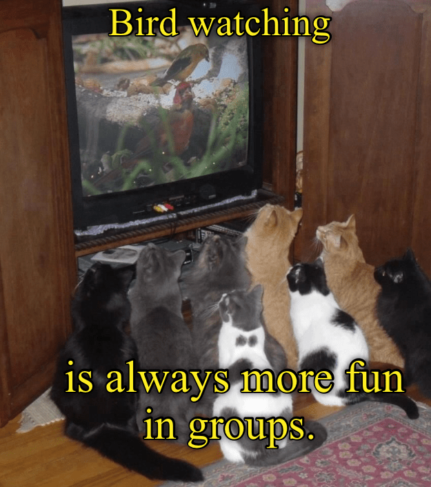 Cat - Bird watching is always more.fun in groups.