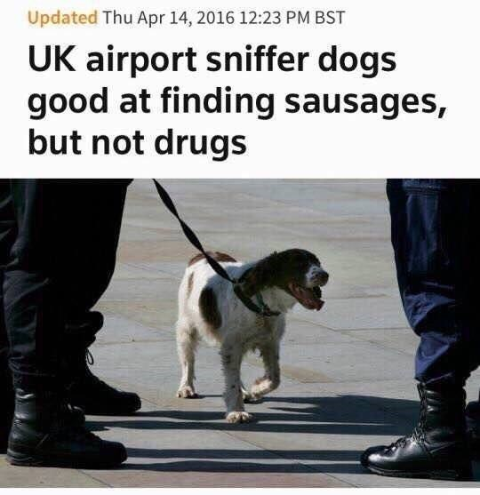 Dog - Updated Thu Apr 14, 2016 12:23 PM BST UK airport sniffer dogs good at finding sausages, but not drugs