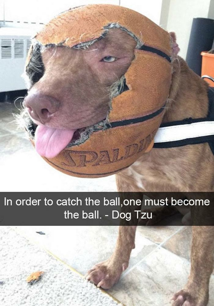 Dog - PALD In order to catch the ball,one must become the ball. - Dog Tzu