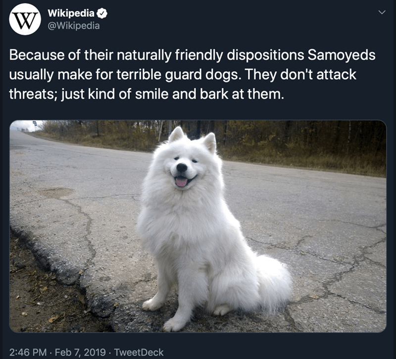 Mammal - Wikipedia W @Wikipedia Because of their naturally friendly dispositions Samoyeds usually make for terrible guard dogs. They don't attack threats; just kind of smile and bark at them. 2:46 PM Feb 7, 2019 TweetDeck