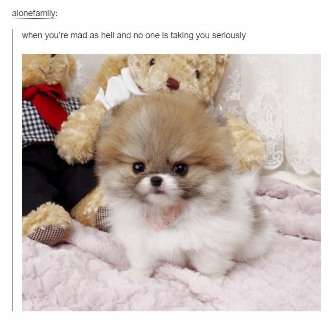 Dog - alonefamily: when you're mad as hell and no one is taking you seriously