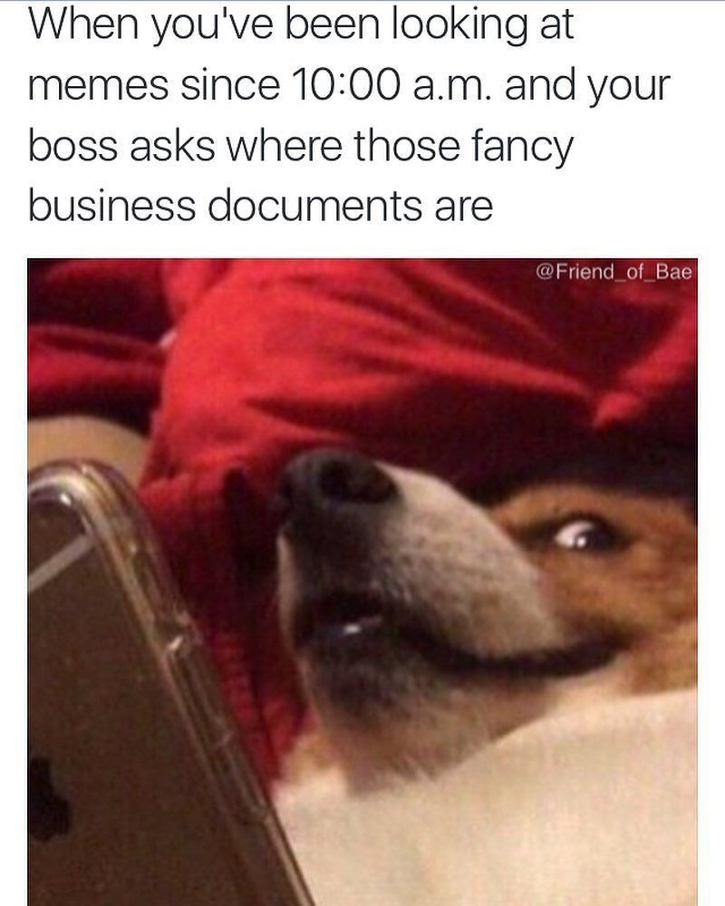 Dog - When you've been looking at memes since 10:00 a.m. and your boss asks where those fancy business documents are @Friend_of Bae