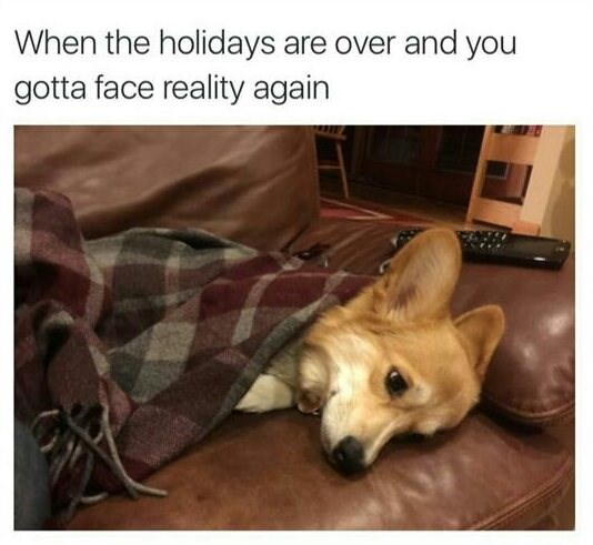 Dog - When the holidays are over and you gotta face reality again