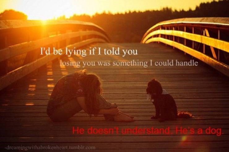 Text - I'd be lying if I told you tosing you was something I could handle He doesn't understand He's a dog dreamingwithabrokenheart.tomblr.com