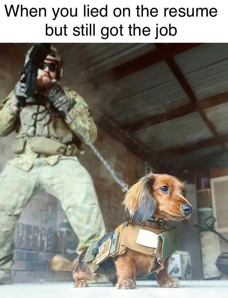 Dog - When you lied on the resume but still got the job