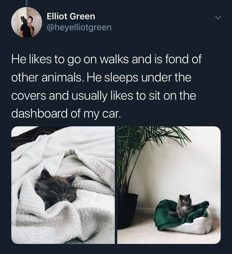 Text - Elliot Green @heyelliotgreen He likes to go on walks and is fond of other animals. He sleeps under the covers and usually likes to sit on the dashboard of my car.
