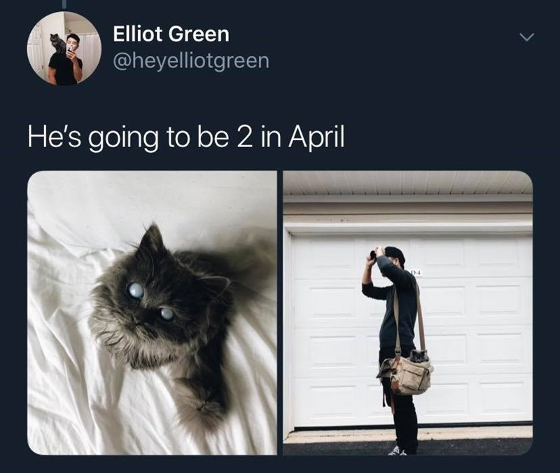 Cat - Elliot Green @heyelliotgreen He's going to be 2 in April D4