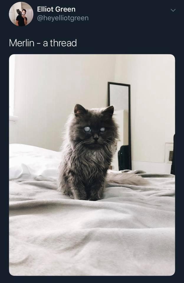 Cat - Elliot Green @heyelliotgreen Merlin a thread