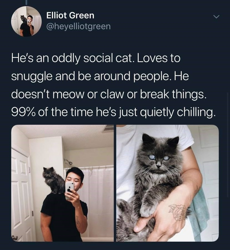 Cat - Elliot Green @heyelliotgreen He's an oddly social cat. Loves to snuggle and be around people. He doesn't meow or claw or break things. 99% of the time he's just quietly chilling.