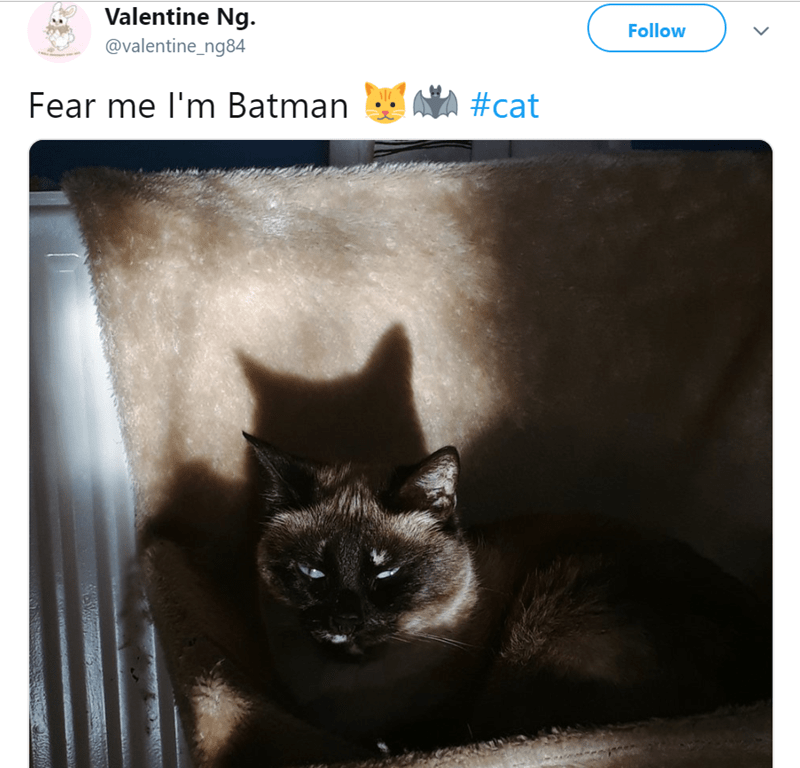 Cat - Valentine Ng. Follow @valentine_ng84 AVA #cat Fear me I'm Batman