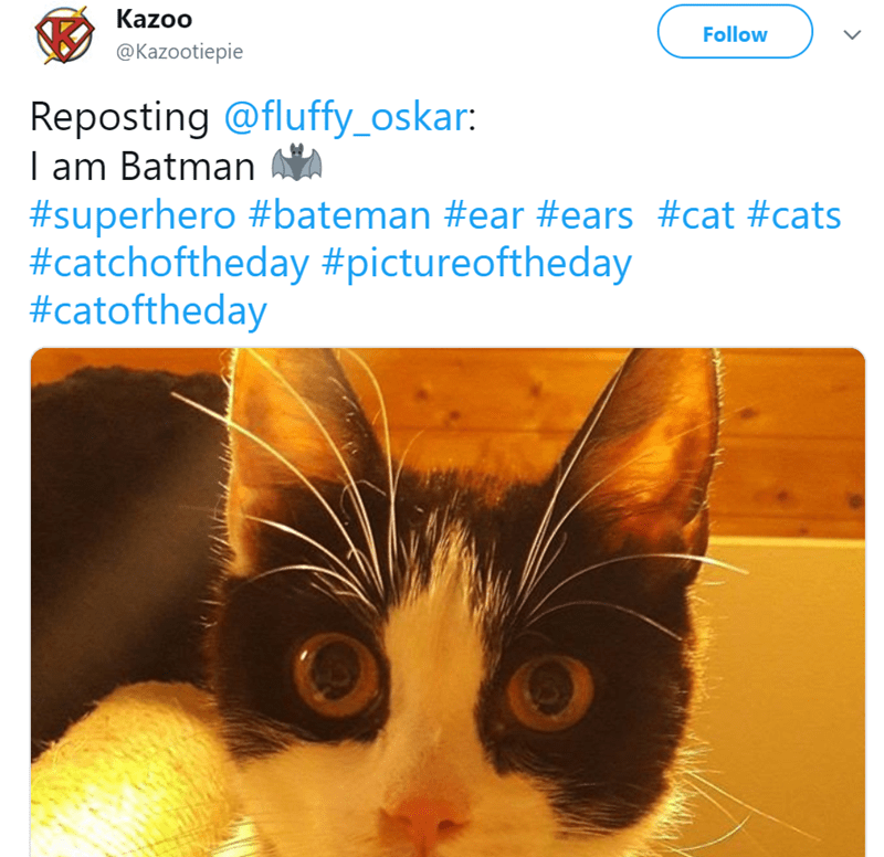 Cat - Whiskers - Kazoo Follow @Kazootiepie Reposting @fluffy_oskar: I am Batman #superhero #bateman #ear #ears #cat #cats #catchoftheday #pictureoftheday #catoftheday >