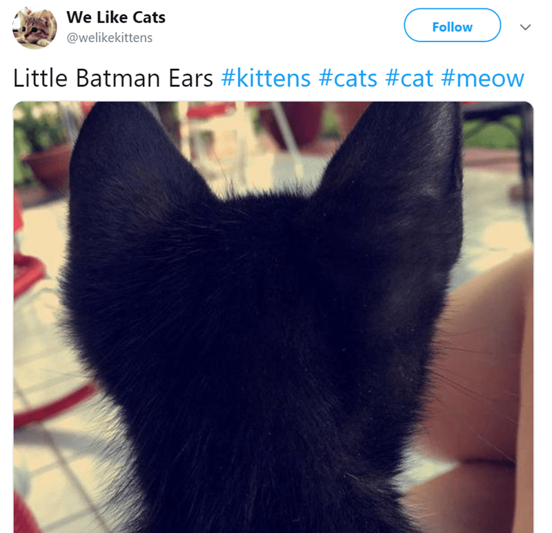 Cat - Ear - We Like Cats Follow @welikekittens Little Batman Ears #kittens #cats #cat #meow