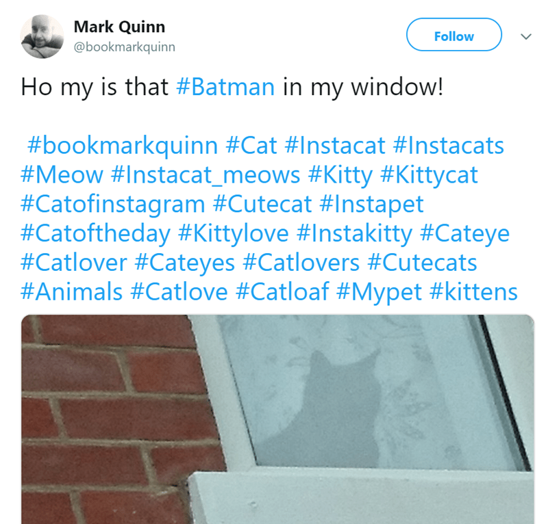 Product - Mark Quinn Follow @bookmarkquinn Ho my is that #Batman in my window! #bookmarkquinn #Cat #Instacat #Instacats #Meow #Instacat_meows #Kitty #Kittycat #Catofinstagram #Cutecat # Instapet #Catoftheday #Kittylove #Instakitty #Cateye #Catlover #Cateyes #Catlovers #Cutecats #Animals #Catlove #Catloaf #Mypet #kittens