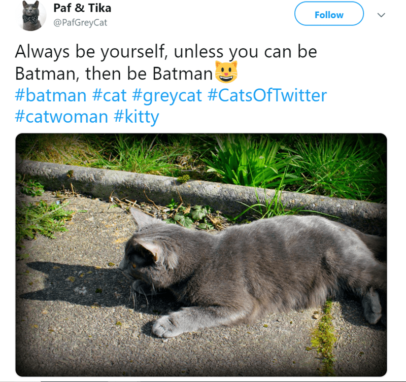 Cat - Paf & Tika Follow @PafGreyCat Always be yourself, unless you can be Batman, then be Batman #batman #cat #greycat #CatsOfTwitter #catwoman #kitty