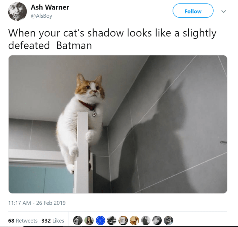 Cat - Ash Warner Follow @AlsBoy When your cat's shadow looks like a slightly defeated Batman 11:17 AM 26 Feb 2019 68 Retweets 332 Likes EU