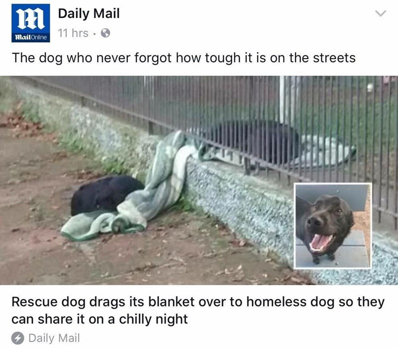 Adaptation - Daily Mail 11 hrs Mail Online The dog who never forgot how tough it is on the streets Rescue dog drags its blanket over to homeless dog can share it on a chilly night they SO Daily Mail