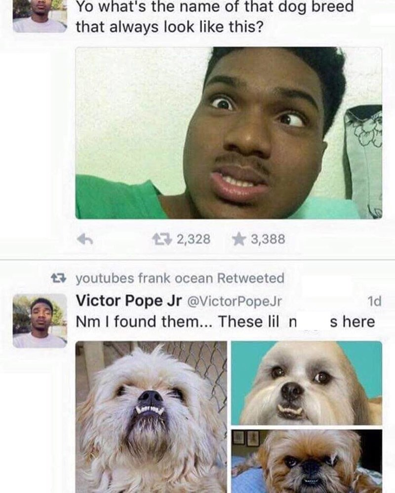 "Tweet that reads, ""Yo what's the name of that dog breed that always look like this?"" above a pic of a guy making a ridiculous face with an under bite; he comments below, ""Never mind I found them...these lil n*ggas here"" above pics of shih tzus"