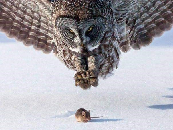 perfect timing - Owl
