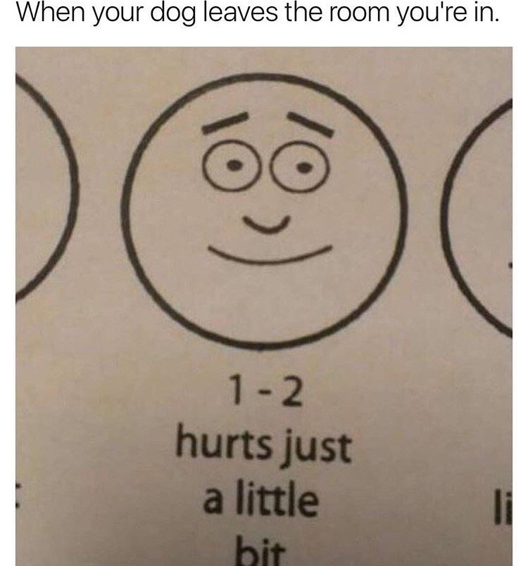 """Caption that reads, """"When your dog leaves the room you're in"""" above a drawing from a pain meter with text that reads, """"1-2 hurts just a little bit"""""""