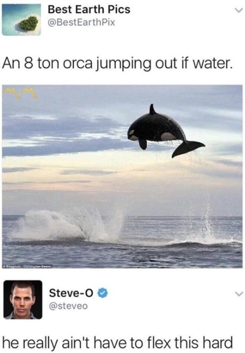 Dolphin - Best Earth Pics @BestEarthPix An 8 ton orca jumping out if water. Chistepte Steve-O @steveo he really ain't have to flex this hard
