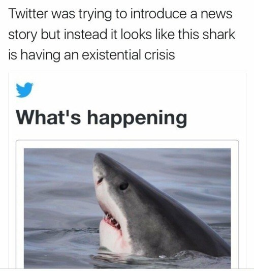 Shark - Twitter was trying to introduce a news story but instead it looks like this shark is having an existential crisis What's happening