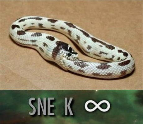 Snake - SNE K O