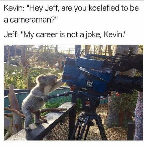 """Photography - Kevin: """"Hey Jeff, are you koalafied to be a cameraman?"""" Jeff: """"My career is not a joke, Kevin."""" wth race"""
